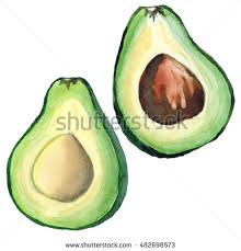 hand drawn avocado sketch realistic delicious stock illustration