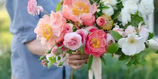 Verbena Flower Flowers U0026 Cutting Garden Verbena Living Roseville Farmer Florist