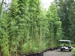bamboo price list