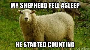 Short Memes - 23 funny sheep memes botch