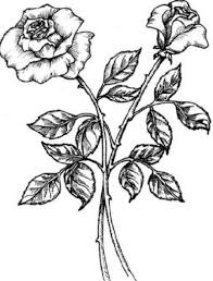 easy rose drawings in black and white clipart