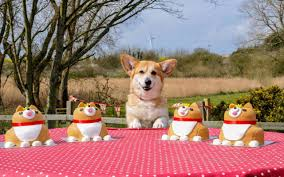 100 the queens corgis a compendium of design and