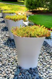 native plants for pots high gloss pots from vondom with drought tolerant sedum low