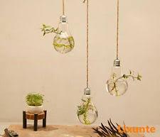 Wall Mounted Glass Flower Vases Glass Bulb Vases Ebay