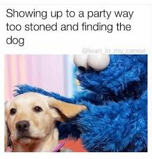 Stoned Dogs Meme - showing up to a party way too stoned and finding the dog in my