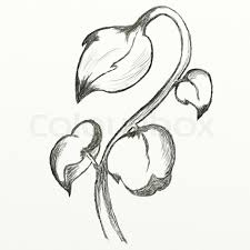 Pencil Sketch Of Flower Vase Flowers Sketch This Is Picture Drawed With Pencil Stock Photo