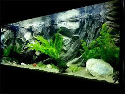Aquarium Decorations 20 Best How To Decorate Your Aquarium With Silicone Aquarium