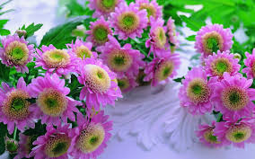 of beautiful flowers