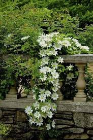 821 best white gardens images on pinterest white gardens white