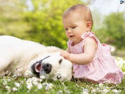 baby u0027s get along well with animals a baby u0027s eye u0027s are gr