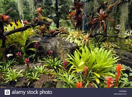 Bromeliads In Singapore National Orchid Stock Photos U0026 Bromeliads