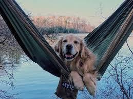 hammock dog hammock camping experiences and blog