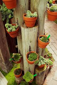 Best Plants For Vertical Garden - bonito arranjo para suculentas jardim pinterest tower
