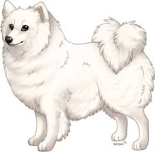 american eskimo dog forum american eskimo dog ib entry accepted by snowluff on deviantart