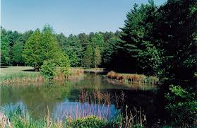 Delaware forest images File blackbird pond jpg wikimedia commons jpg