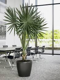 plante verte bureau plante verte bureau fleuriste bulldo