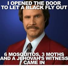 Fly Out Memes - i opened the door to let a black fly out mosquitos 3 moths and a