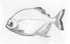 sketch zoo piranha by rode egel on deviantart