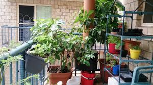 Garden In Balcony Ideas Stunning Small Apartment Garden Contemporary Liltigertoo