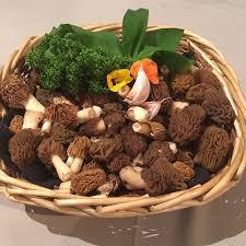 cuisiner les morilles fraiches morilles fraîches picture of le le puy en velay