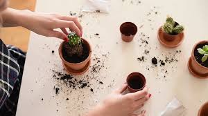 small flower pot putting dirt inside flower pot with small cactus stock video