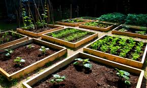 growing and gardening in silty soil growth as nature intended