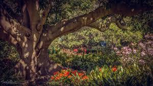 Botanical Garden Sydney by The Royal Botanic Gardens A City Oasis Sydney