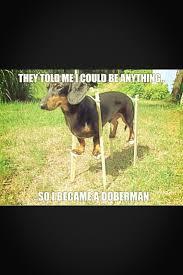 Weiner Dog Meme - ashley shelton on twitter nikkibplease wiener dog memes always