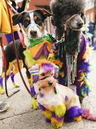 mardi gras dog made in flavors only found in wisconsin s capital pet