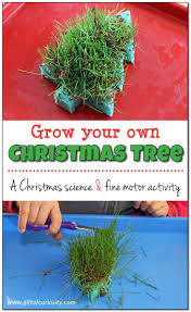 cut your own christmas tree illinois christmas lights decoration