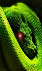 a green snake wallpapers amazon com moving snake live wallpaper appstore for android