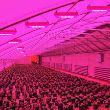 red and blue led grow lights led growing lights can provide artificial light used for plant