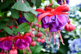 Plants That Don T Need Water 10 Best Flowers To Use In Hanging Baskets
