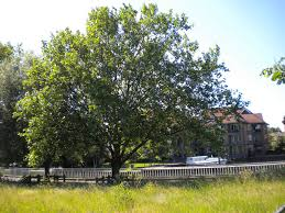 Define Tree Walks Round Cambridge