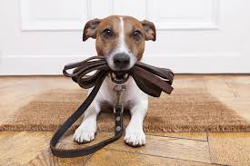 Do Dogs Scratch Laminate Floors How To Stop Your Dog From Scratching Your Hardwood Floors Jke