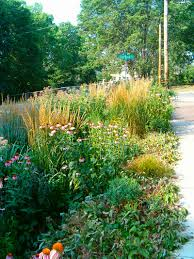 native plants in landscape management native landscaping mmsd