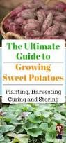 Vegetable Container Gardening Guide by 1449 Best Images About Homesteading U0026 Gardening On Pinterest