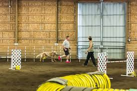 bluetick vs english coonhound 25 gifs of dogs competing in agility american kennel club