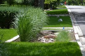 native plants in landscape management garden swales u2013 tips for creating a swale in your garden