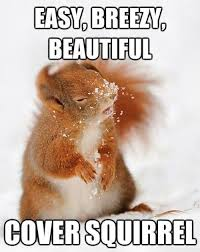 Dramatic Squirrel Meme - 41 most funniest squirrel memes images pictures gifs picsmine