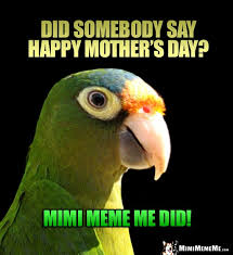 Parrot Meme - parrot asks did somebody say happy mother s day mimi meme me did