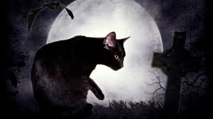 black cat and the moon wallpapers and images wallpapers