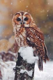 best 25 owls ideas on pinterest baby owl beautiful owl and