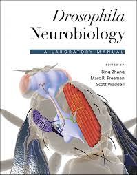 drosophila neurobiology a laboratory manual edited by bing