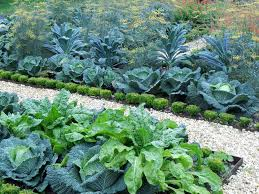 raised bed landscape traditional with organic vegetable