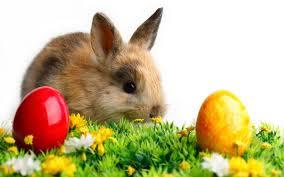 bunny easter easter bunny craftshady craftshady
