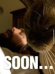 Soon Cat Meme - soon cat memes