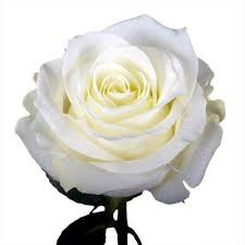 Flower Delivery Free Shipping Free Shipping Rose Garden Plants U0026 Flowers Garden Center