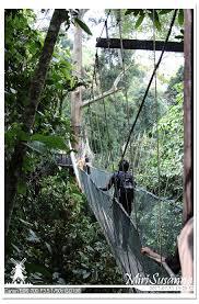 canap駸 clic clac 17返馬 20170731 亞庇kk 4 poring canopy treetop walk