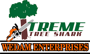 leader in land clearing services companies xtreme tree shark